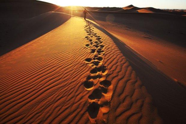 z13672511Q,Spacer-po-Pustyni-Namib---shutterstock